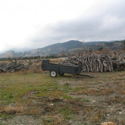 2010 Chopped Trees at E.P. Orchards u-pick in Summerland BC