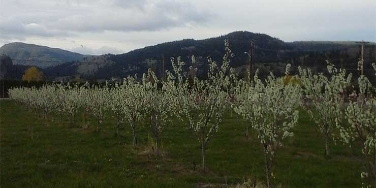 E.P. Orchards Upick in Summerland BC